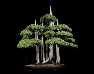 Untitled #4, The Bonsai Project: Typology. © Sjoerd Knibbeler and Rob Wetzer