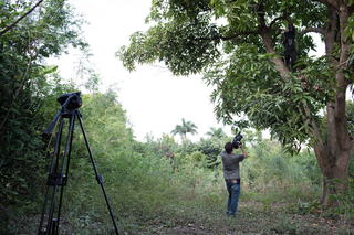 Farmer Fleurisca Malvoisin prunes his sole mango tree. He is being filmed by a camera crew from the aid organization that provided him with training on how to better care for his tree. Photo by Pieter van den Boogert