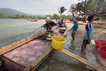 Landing jellyfish in Ban Talae Nok, Thailand. Photo from Hollandse Hoogte