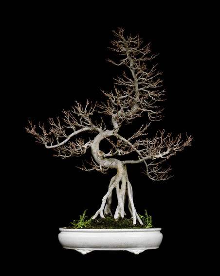 Untitled #2, The Bonsai Project: Typology. © Sjoerd Knibbeler and Rob Wetzer