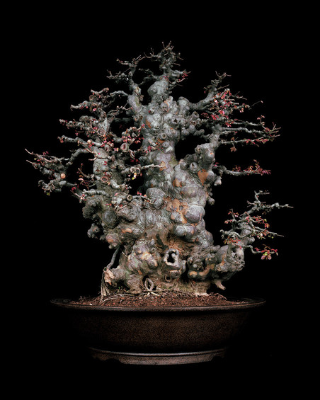 Untitled #1, The Bonsai Project: Typology. © Sjoerd Knibbeler and Rob Wetzer