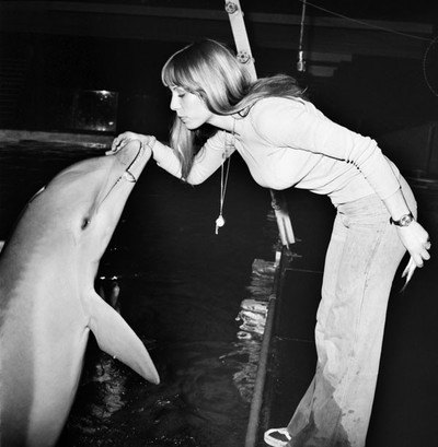 Dolphin at a dolphinarium getting rewarded with fish. Photo by Mirropix / Getty Images